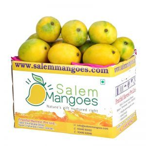 Buy Best Salem Bangalora from Largest Online Mango Farm & Seller